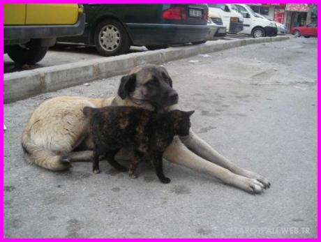 Köpek İle İlgili Batıl İnançlar _43.jpg